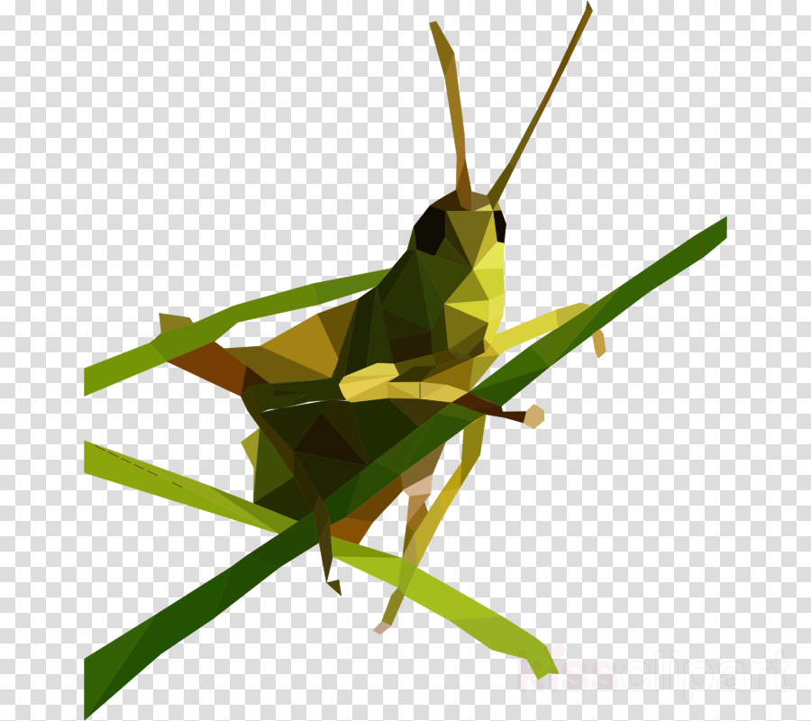 low poly grasshopper clipart Insect Grasshopper Clip art