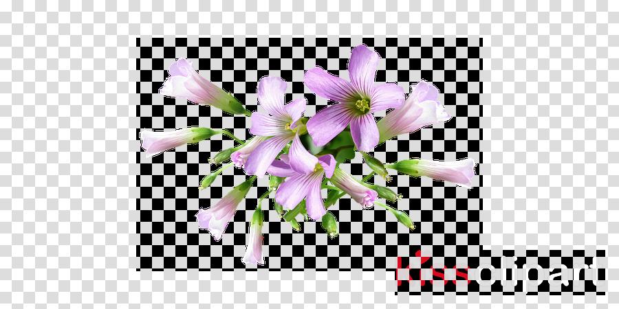 cut flowers clipart Cut flowers Plants Herbaceous plant