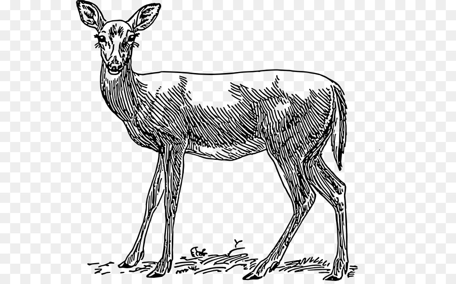 Deer Animal Tree Transparent Png Image Clipart Free Download