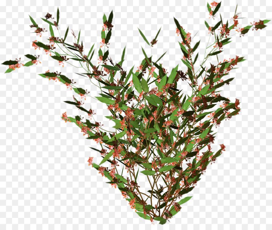 leaf clipart Twig Plant stem Leaf