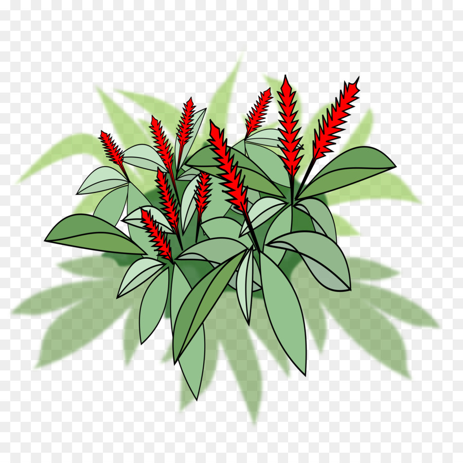 plant bovenaanzicht png public clipart Red ginger Flowering plant Plants