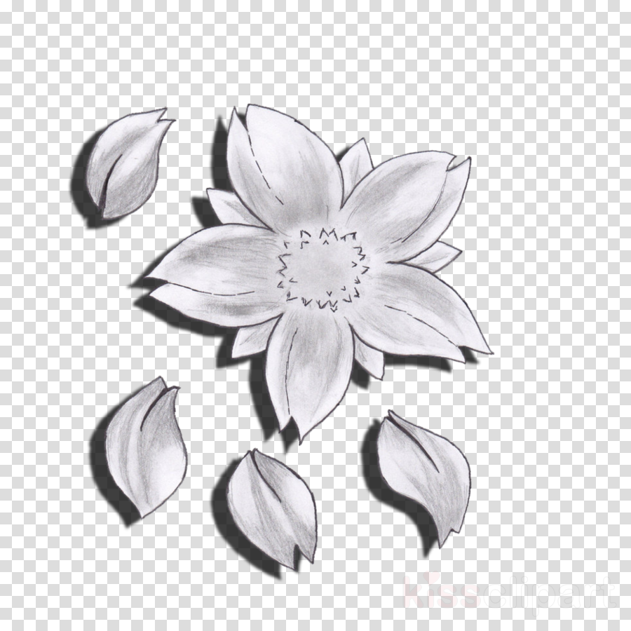 Download cherry blossom flower drawing clipart drawing petal cherry