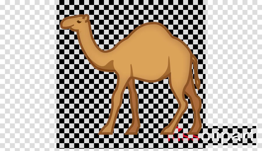 Bactrian camel clipart Dromedary Bactrian camel Horse