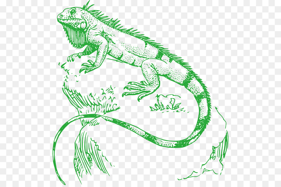 Download iguana real para colorear clipart Reptile Green iguana ...
