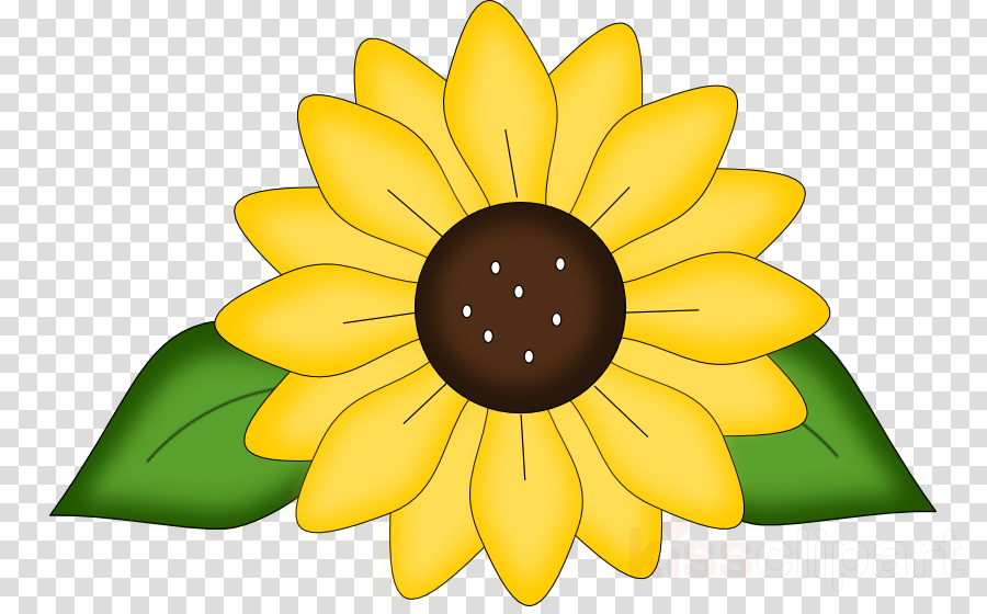 Flower Sunflower Daisy Transparent Png Image Clipart Free Download
