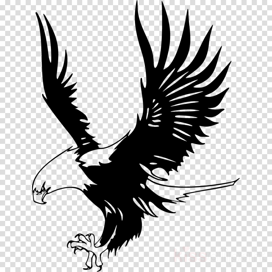 Eagle Bird Feather Transparent Png Image Clipart Free Download