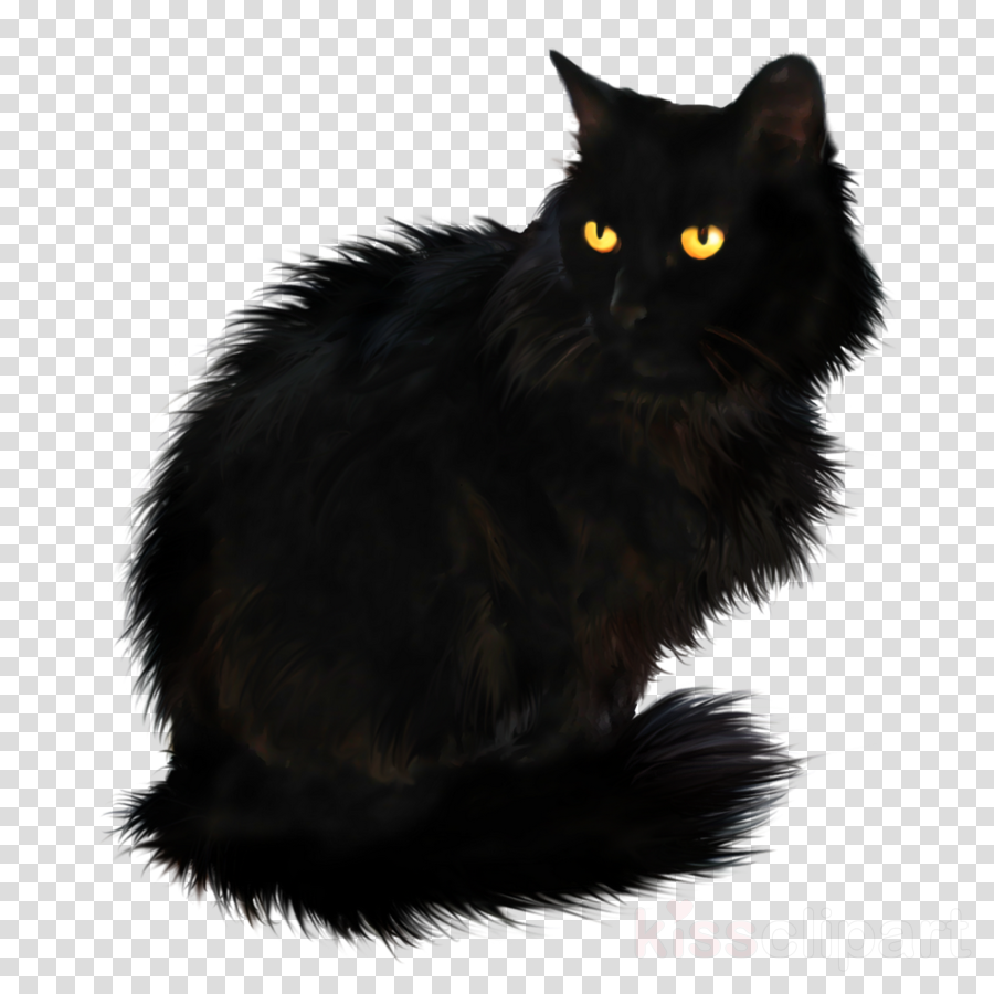 black cat on transparent background clipart Persian cat Maine Coon Kitten