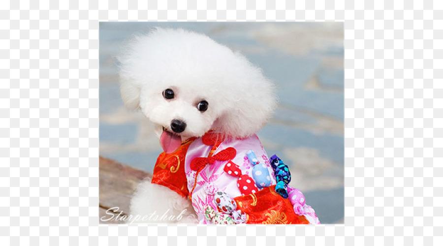 Pomeranian Background