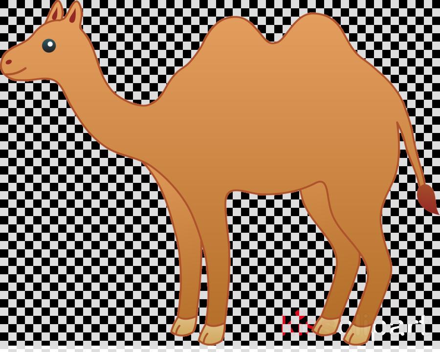 camel clipart Camel Clip art