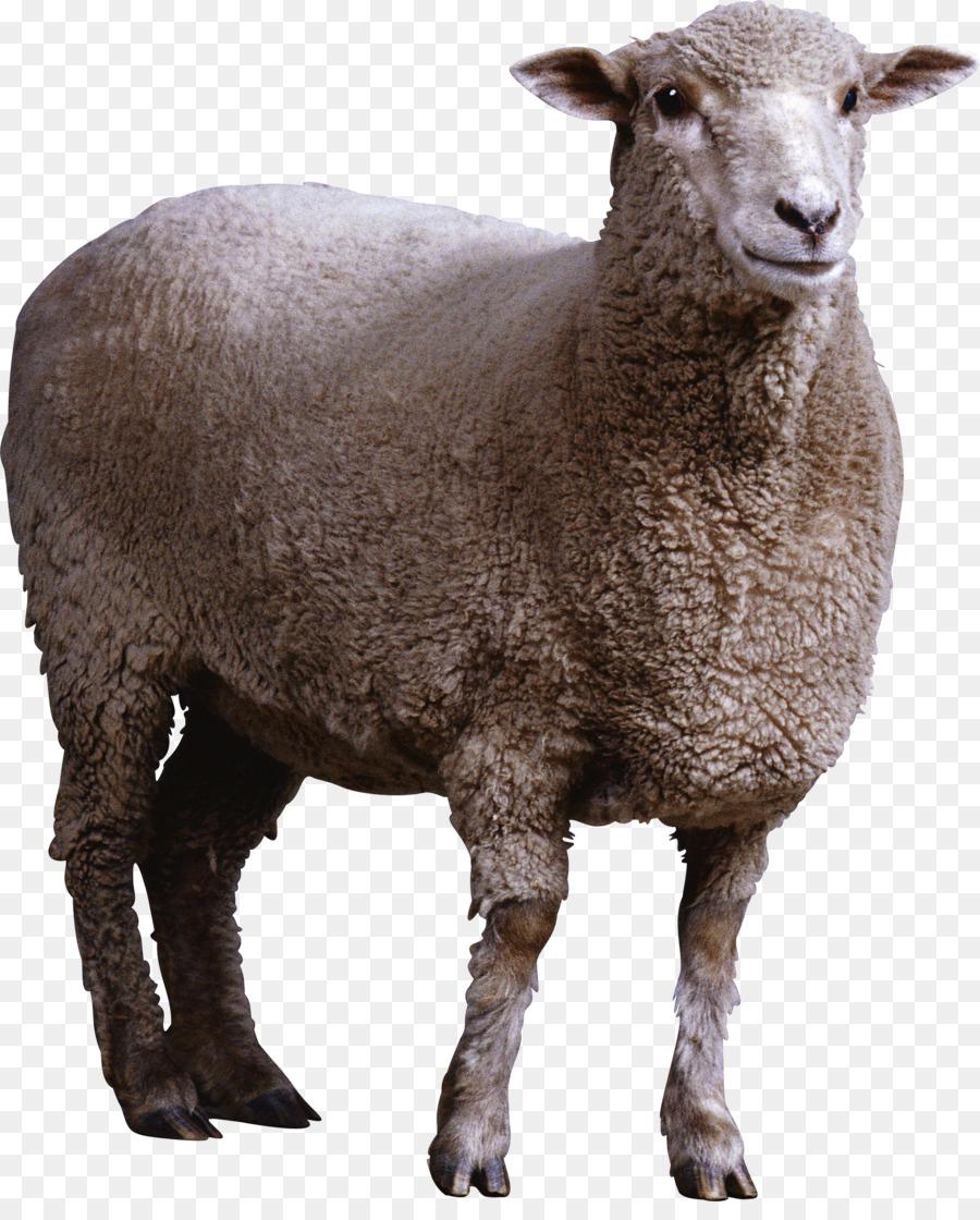Goat Cartoon Clipart Sheep Goat Transparent Clip Art