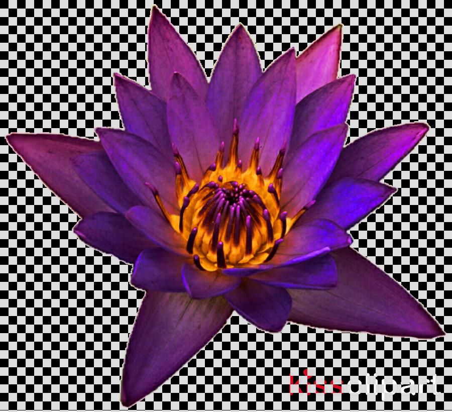 petal clipart Petal Purple Lilac