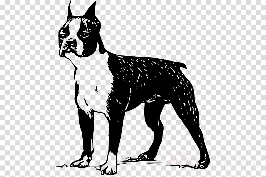 boston terrier silhouette vector clipart Boston Terrier Yorkshire Terrier French Bulldog
