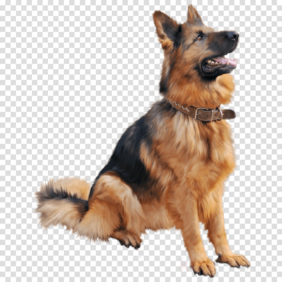 dog png clipart Old German Shepherd Dog Puppy