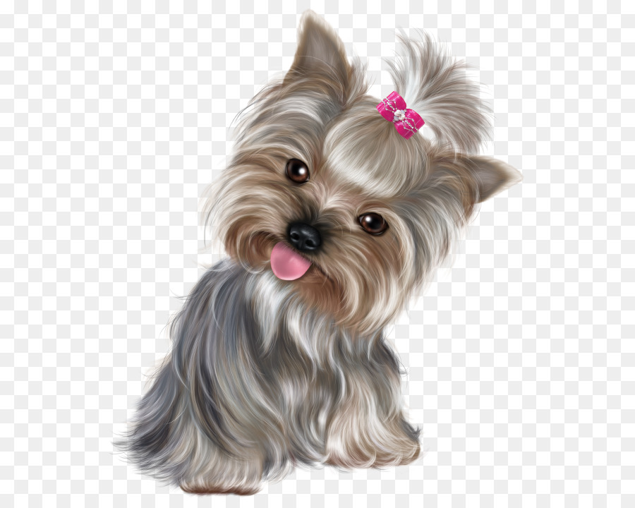 yorkshire png clipart Yorkshire Terrier Puppy Boston Terrier