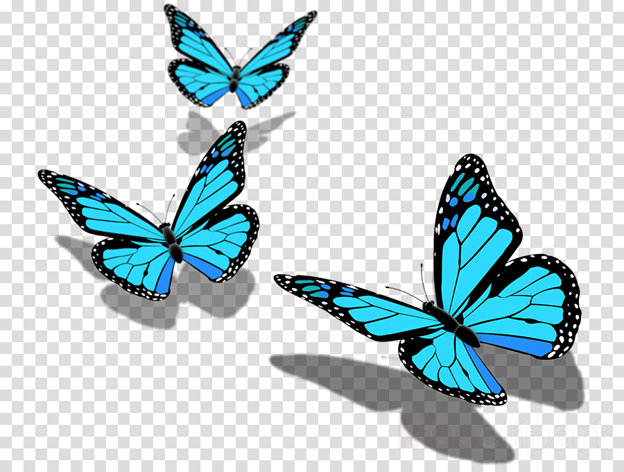 Butterfly clipart Monarch butterfly Poster