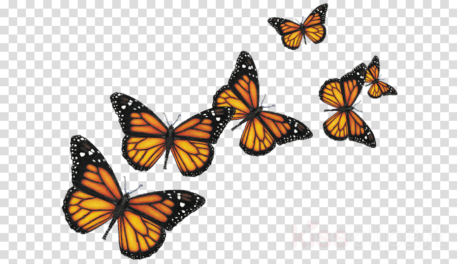 butterfly png clipart Butterfly