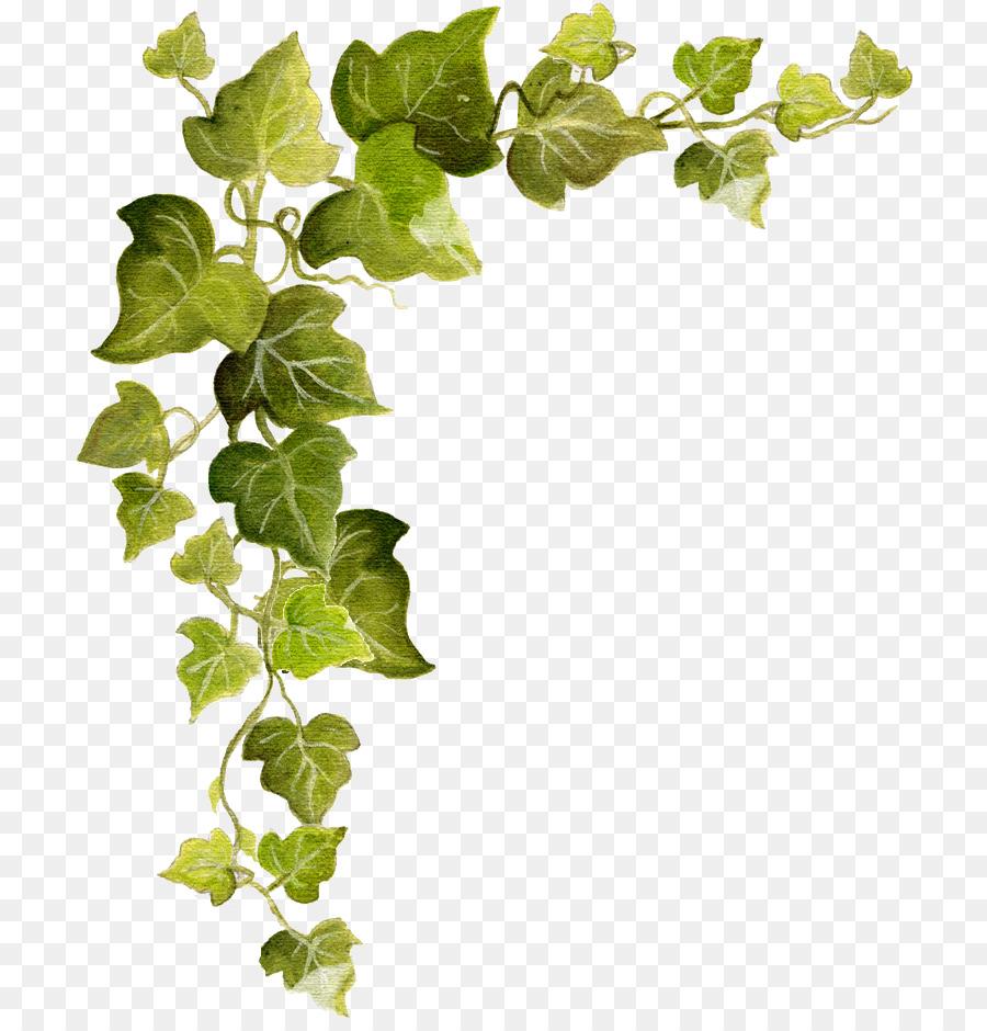 Vine, Leaf, Tree, transparent png image & clipart free download