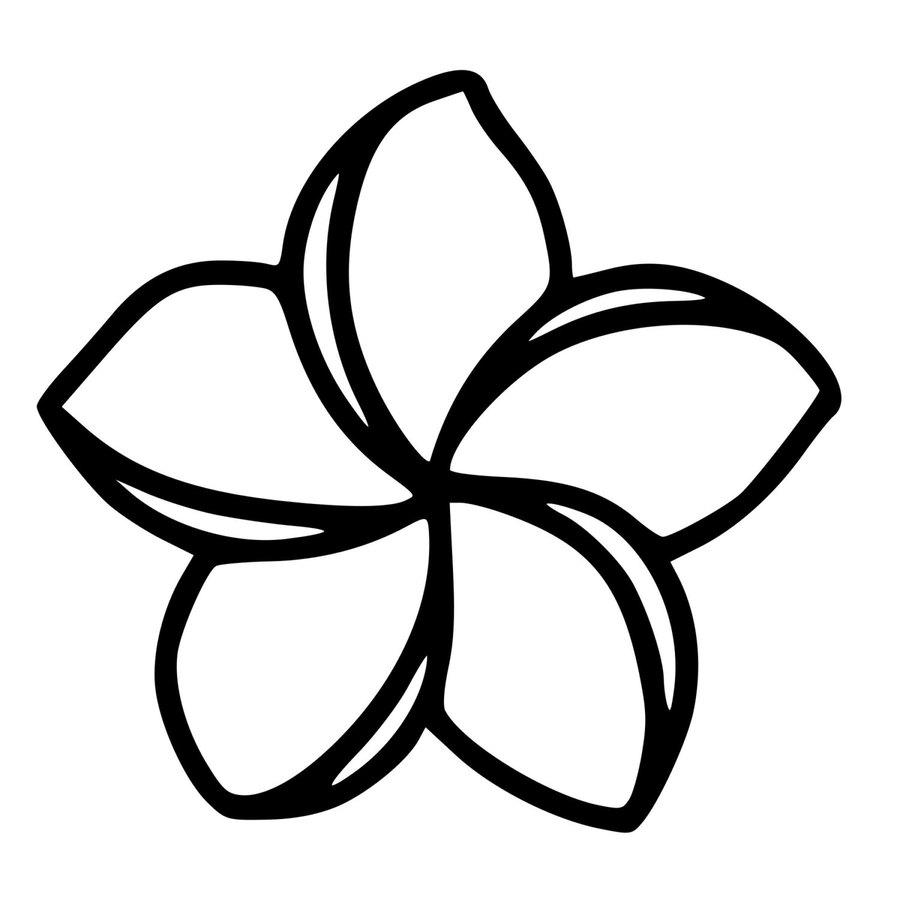 Download Plumeria Flower Black And White Clipart Frangipani Drawing