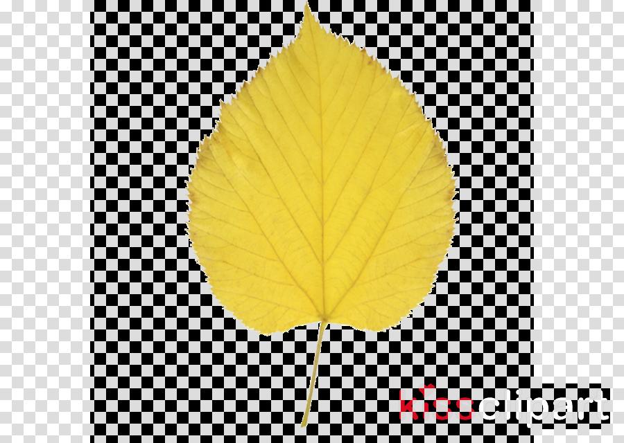 leaf clipart Leaf