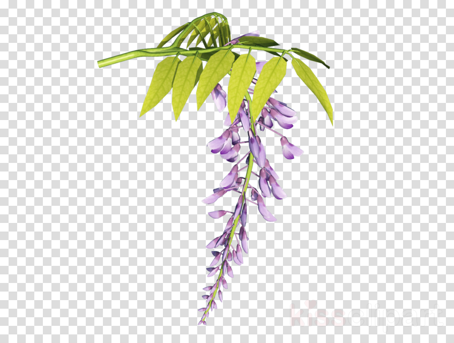 leaf clipart Twig Plant stem Leaf