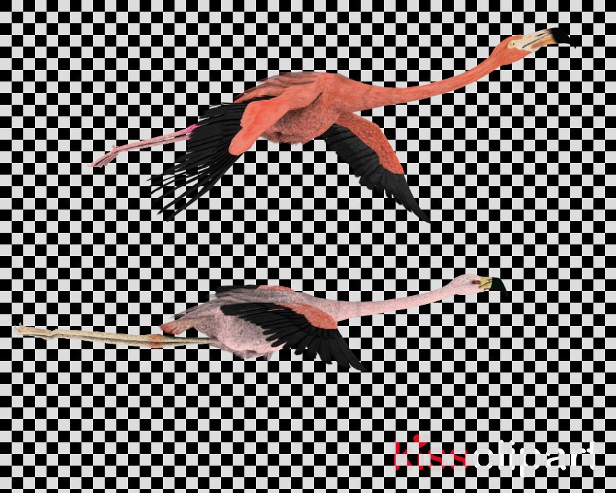 flamingo flying png clipart Flamingo