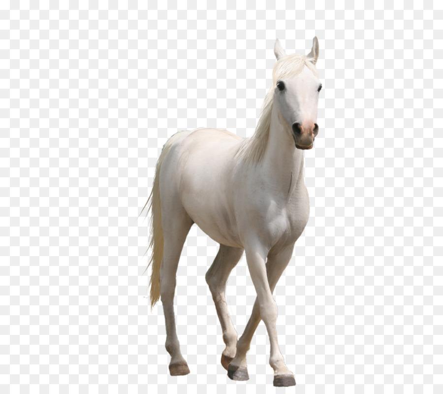 white horse png clipart Pony Arabian horse