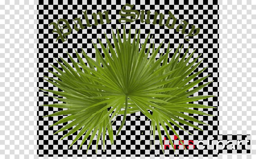 palm for palm sunday clipart Palm trees Palm Sunday Clip art