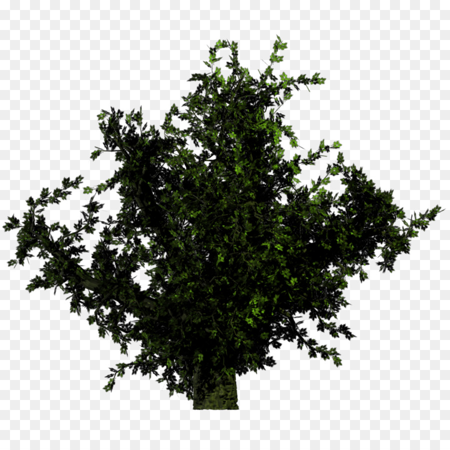 Tree Branchtransparent png image & clipart free download