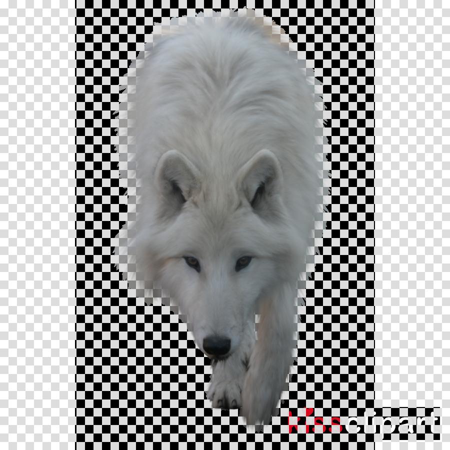 white wolf clipart Arctic fox Arctic wolf Seppala siberian sleddog