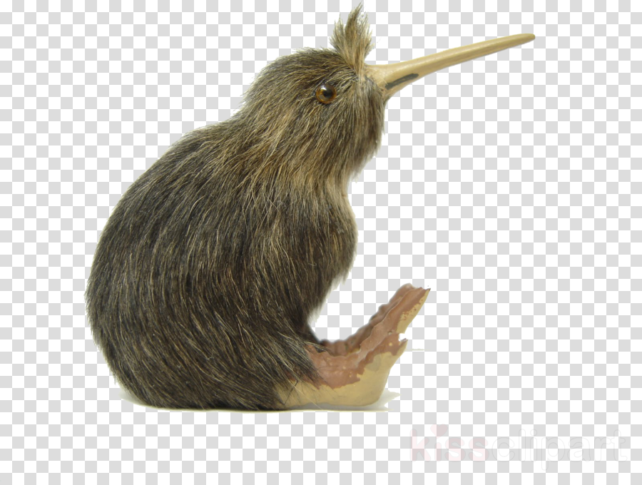 kiwi bird png clipart Bird Clip art