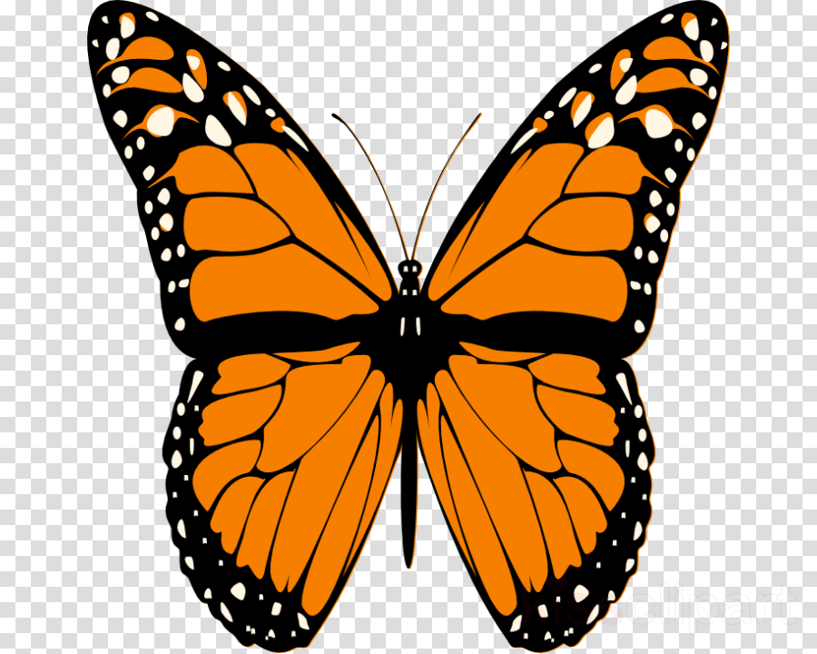 butterfly png clipart Butterfly Clip art