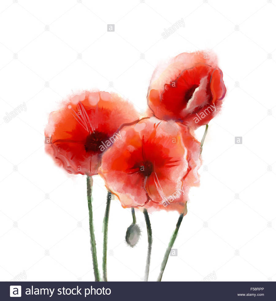 Download Poppy Flower Watercolor Painting Clipart Poppy Flowers