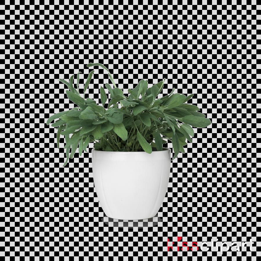plant in pot png clipart Houseplant Flowerpot