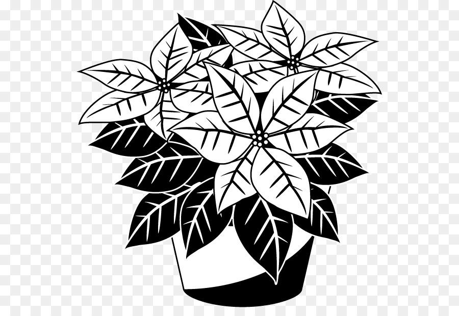 Download black and white poinsettia clipart Poinsettia Clip art ...