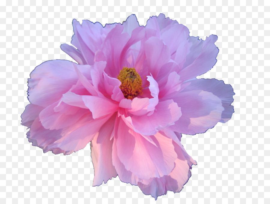 Vaporwave flower. Pink cartoontransparent png image