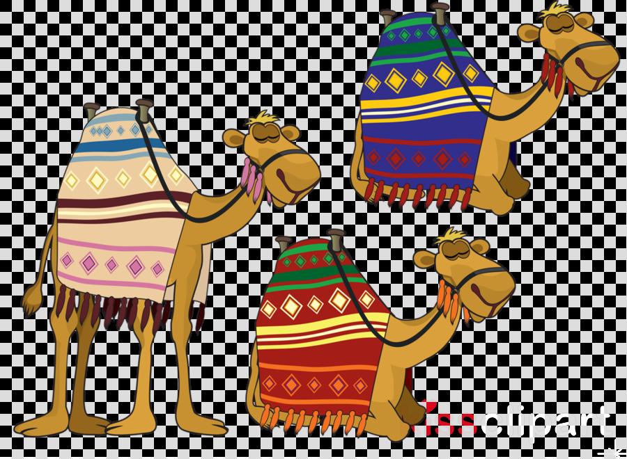 cartoon 3 camels clipart Dromedary Bactrian camel Clip art