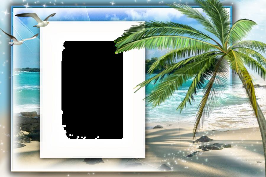 palm tree transparent frames clipart Picture Frames Clip art