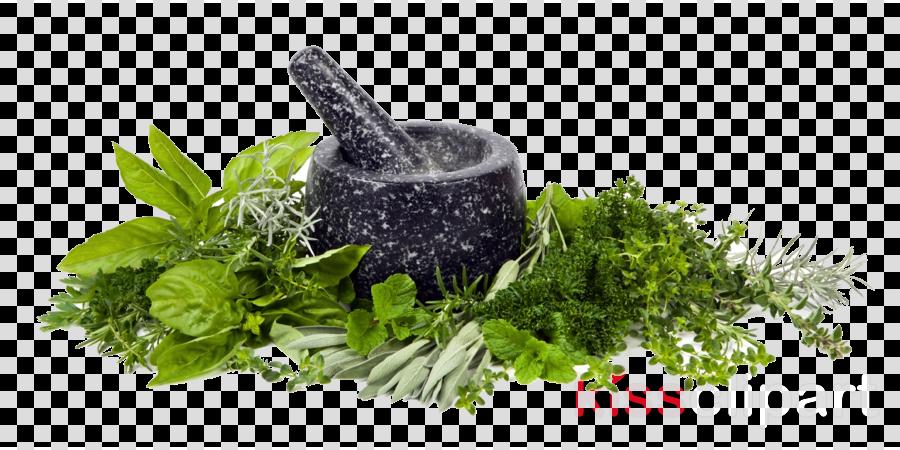 herbs png clipart Herb Clip art