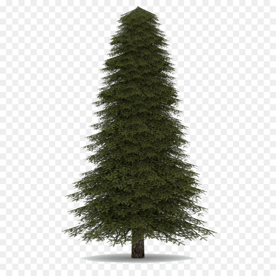 White Christmas Tree Png.White Christmas Tree Clipart Tree Pine Transparent Clip Art