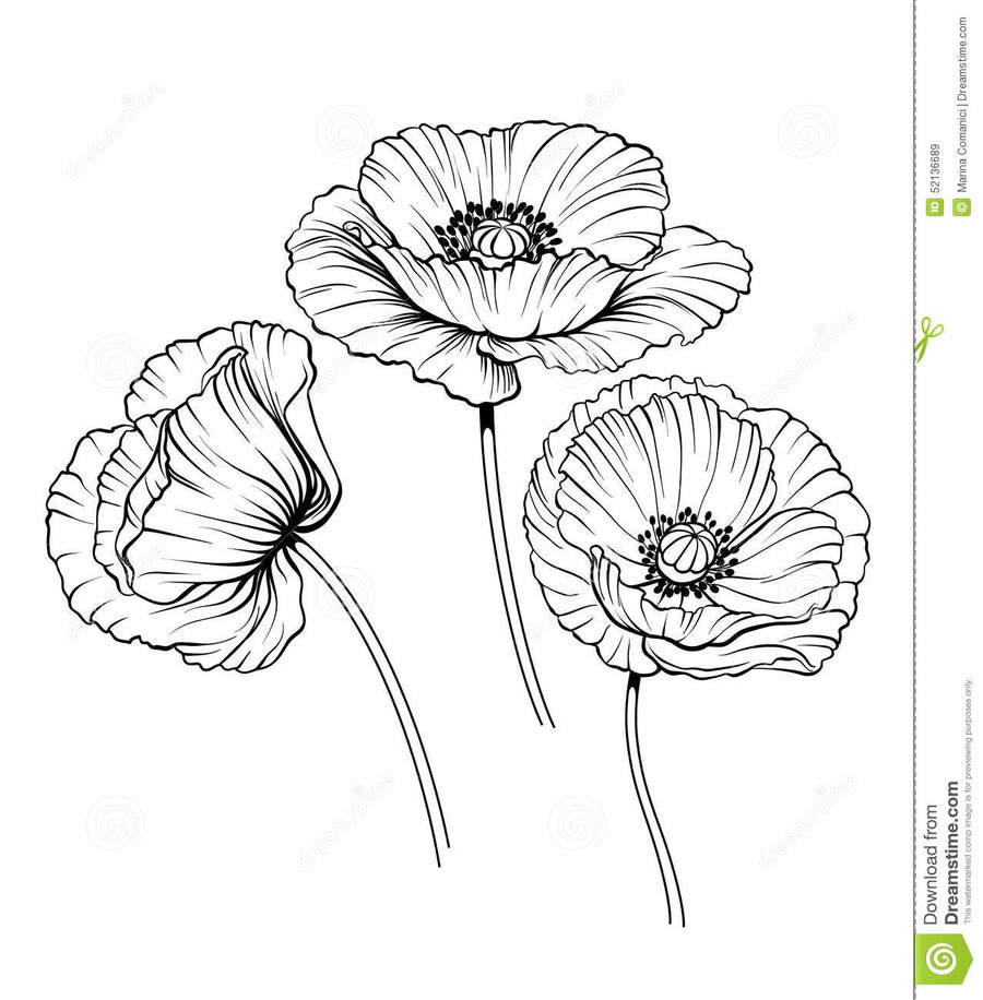 Download poppies drawing clipart drawing poppy clip art poppy download poppies drawing clipart drawing poppy clip art poppy flower mightylinksfo