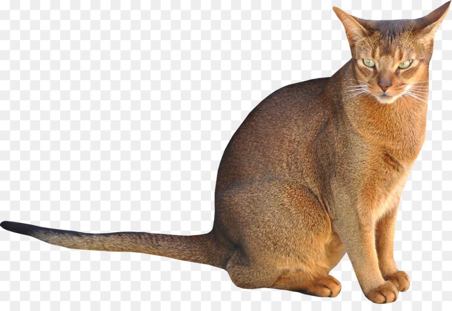Cat Cartoon clipart - Kitten, Pet, Cat, transparent clip art