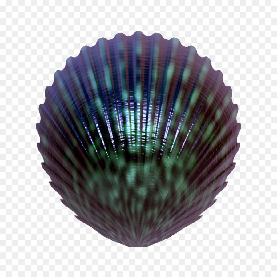 Seashell clipart Seashell Clip art