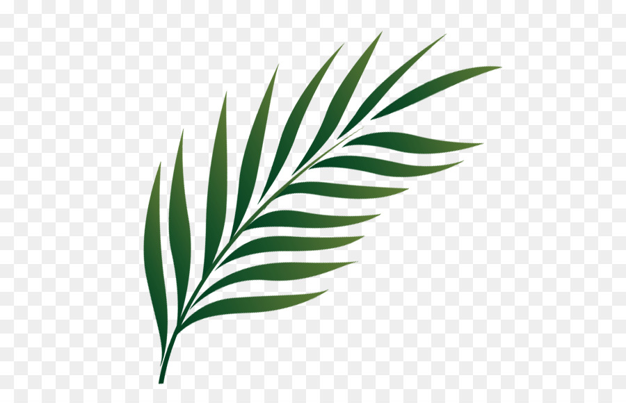 palm sunday png clipart Palm trees Clip art