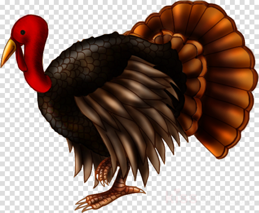 Turkey Thanksgiving Duck Transparent Png Image Clipart Free