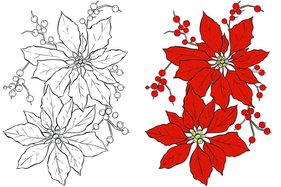 Download christmas flower clipart Poinsettia Coloring book Flower ...