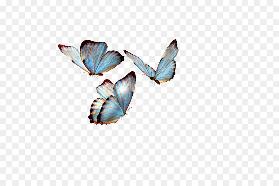 butterfly transparent clipart Butterfly Clip art