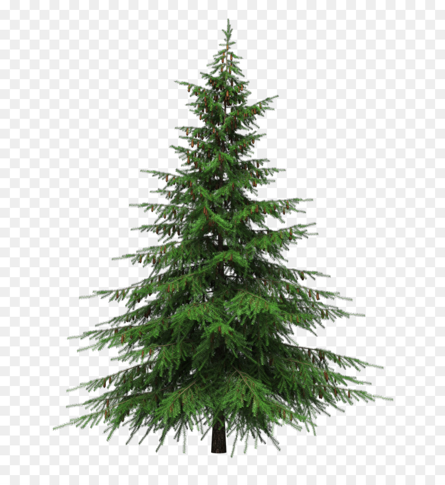Christmas Tree Png Images.Family Tree Background Clipart Pine Tree Transparent