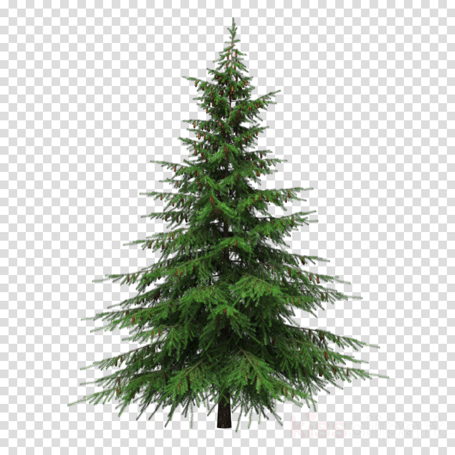 Pine Tree Transparent Png Image Clipart Free Download