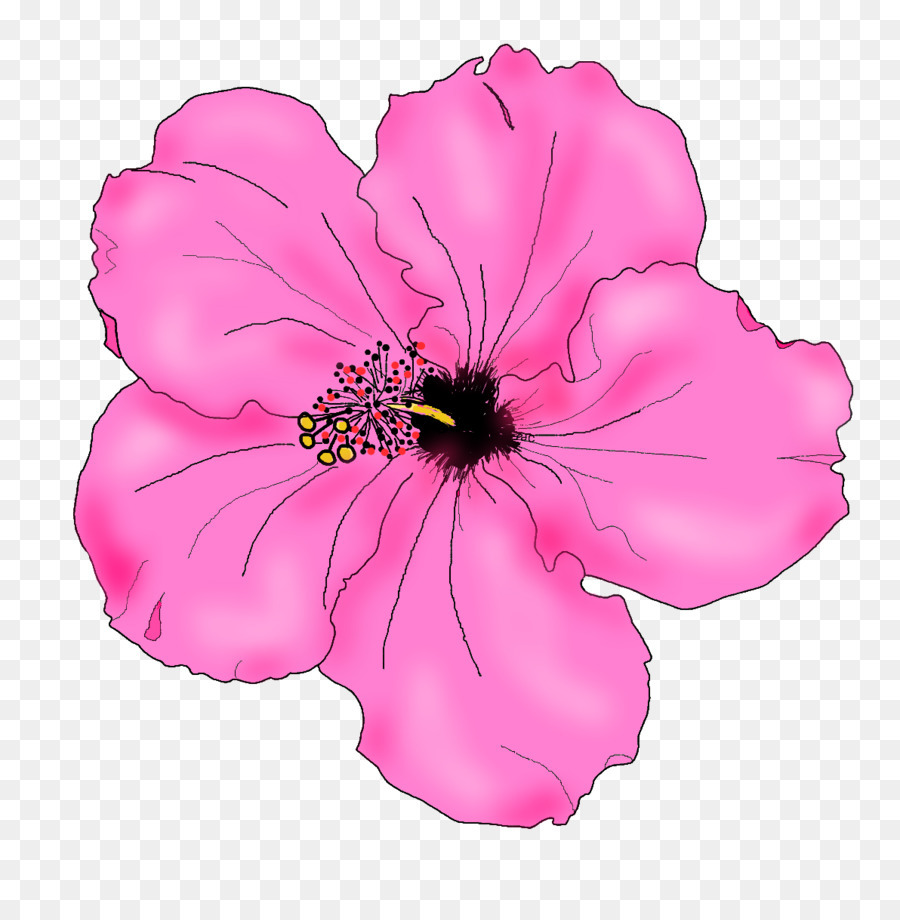 Download Hibiscus Flower Drawing Clipart Shoeblackplant Drawing