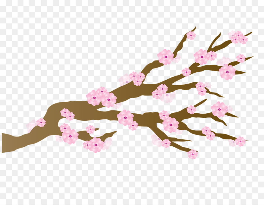 cherry blossom cartoon transparent clipart Cherry blossom Clip art
